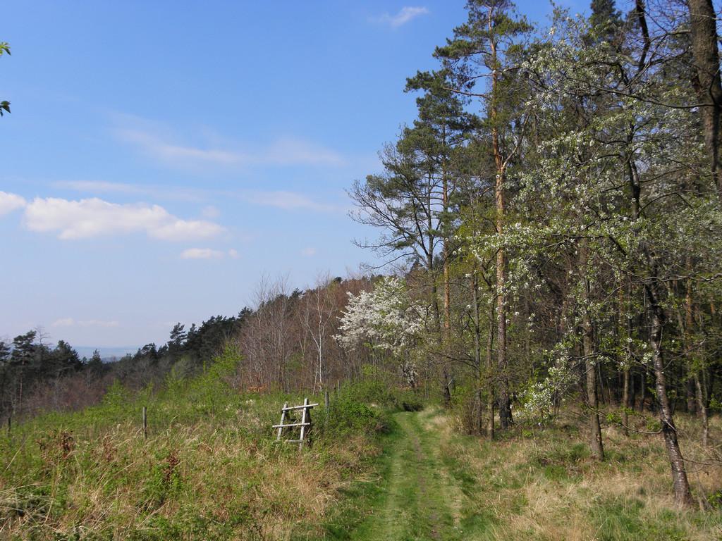 Na grzbiecie Wzgórz Kiełczyńskich
