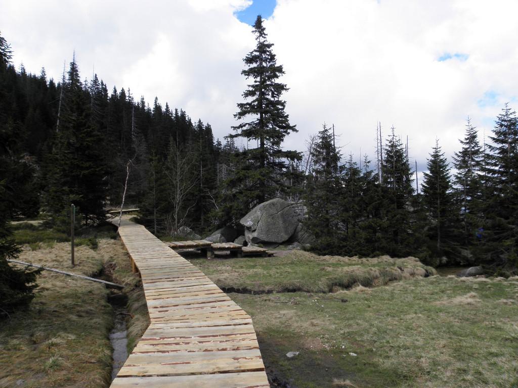 Footbridge through the wet land