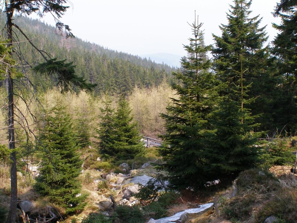 The valley of Wrzosowka