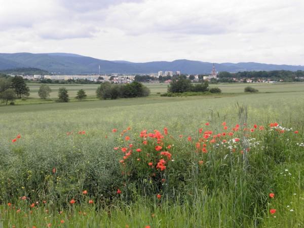 Fields around Bielawa